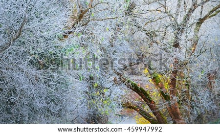 Frozen winter trees with the hoar-frost
