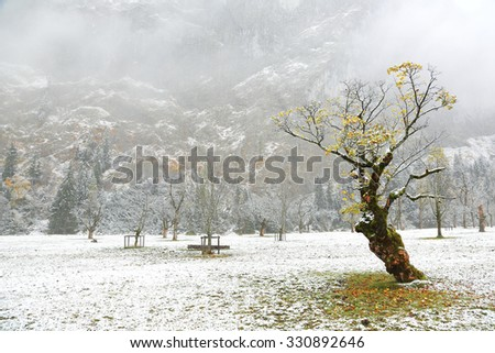 Frozen world~ Snow covered maple trees standing on the meadow by the mountainside in a foggy gloomy morning ~ Beautiful maple trees and the first snow in deep autumn in Austrian Alps - stock photo