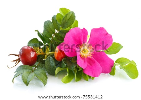 Fruit And Flower Wild Rose On A White Background