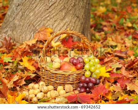 fruit basket in the autumn nature - stock photo