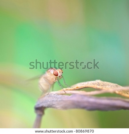 fruit fly on the green background - stock photo