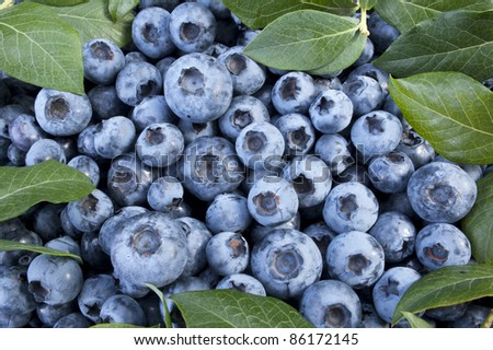 Fruit - Fresh blueberries in the basket - stock photo