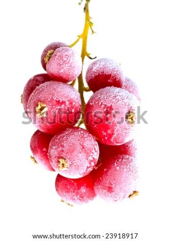 fruit  frozen in ice - stock photo