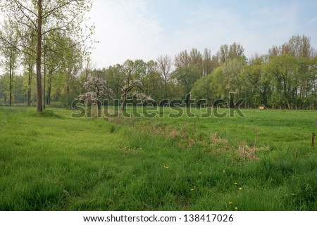 Fruit trees blossoming in a meadow