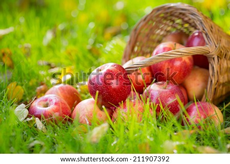 Fruits and flowers in autumn outdoors. Thanksgiving holiday concept