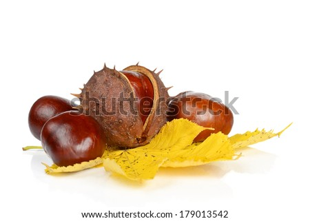 Fruits and leaves of chestnut on a white background - stock photo