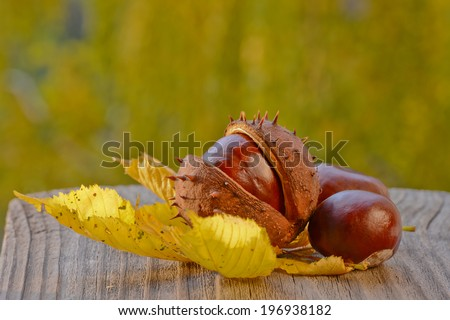 Fruits and leaves of chestnut on the old gray board - stock photo