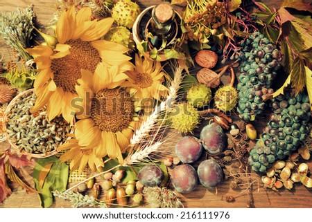 fruits of autumn - stock photo