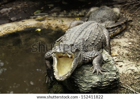 Fuengirola are sleeping crocodile. - stock photo