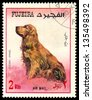 FUJEIRA - CIRCA 1980: Postage stamp printed in Fujeira showing dog cocker spaniel, circa 1980 - stock photo