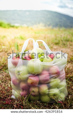Full bag of red and green apples from apple picking in the fall at an orchard - stock photo