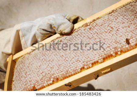 Full Hive Frame - stock photo