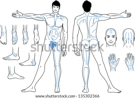 Full length (front & back) views of a standing naked man with massaging lines isolated on white background - stock photo