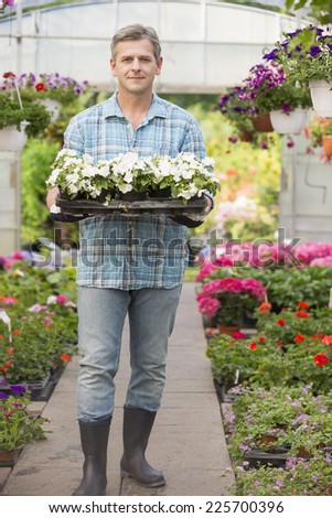 Full-length portrait of gardener carrying crate with flower pots in greenhouse - stock photo
