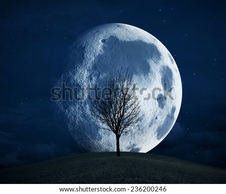 Full moon and a tree silhouette in the night  - stock photo