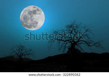 full moon in dark blue sky background a silhouette and dry dead trees