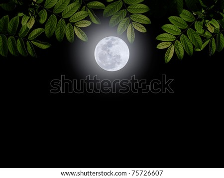 Full moon with green leaf on darkness sky - stock photo