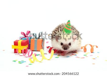 fun birthday young hedgehog baby - stock photo