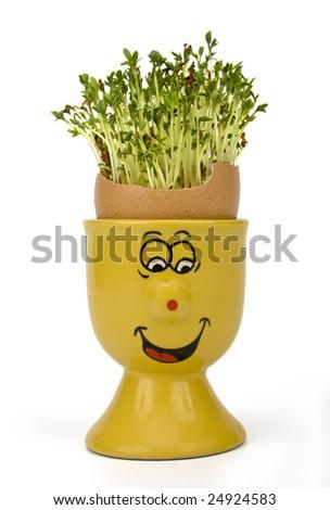 Fun egg cup, eggshell and growing Garden cress (Lepidium sativum) on white background - stock photo