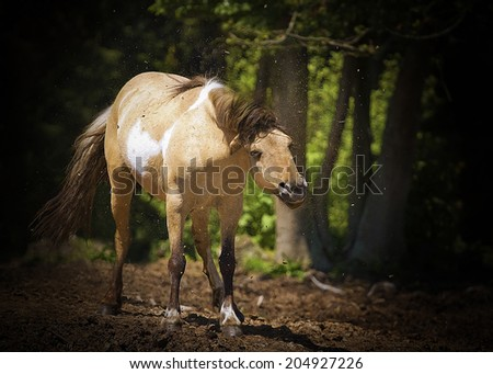 fun welsh pony horse rolling - stock photo