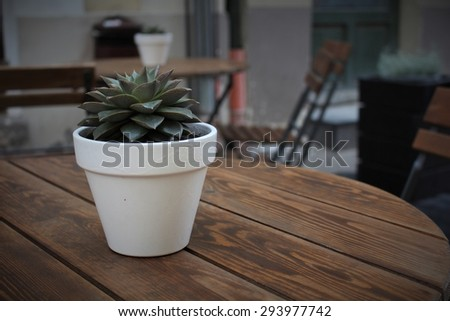 Fun white pot plant on outdoor table cafe - stock photo
