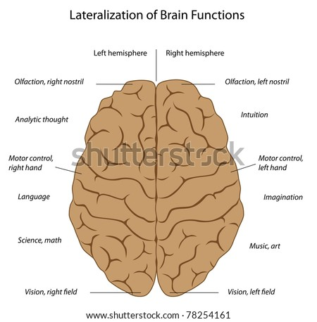 Functions of the brain - stock photo