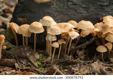 Fungi growth - stock photo