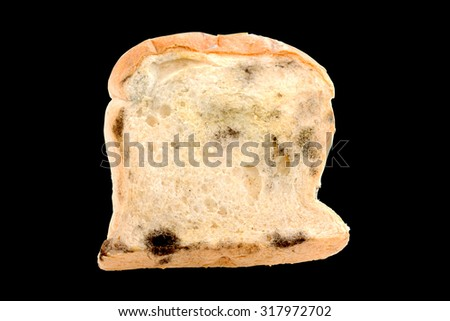 fungi on bread isolated with clipping paths inside - stock photo
