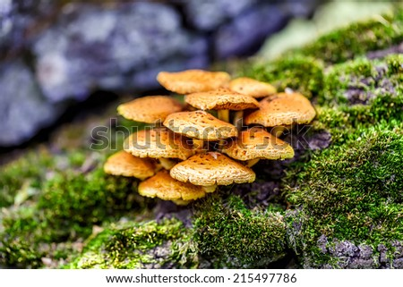 Fungus - stock photo