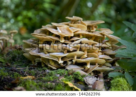 Fungus growing on a tree stump - stock photo