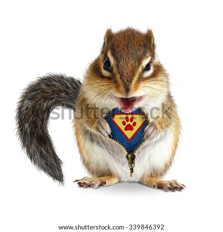 Funny animal super hero, squirrel unbuckle his fur, isolated on white - stock photo