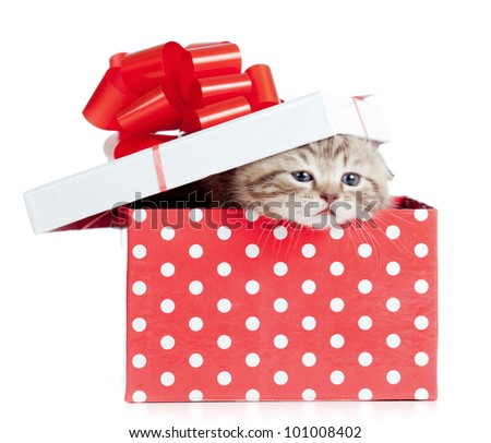 Funny baby cat in red gift box - stock photo