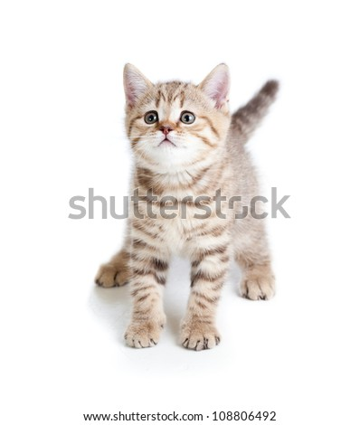 funny baby cat kitten on white background - stock photo
