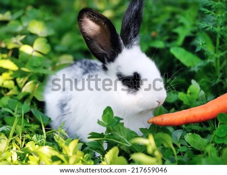 Funny baby white rabbit with a carrot in grass - stock photo