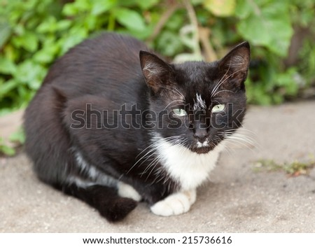 funny black and white cat - stock photo