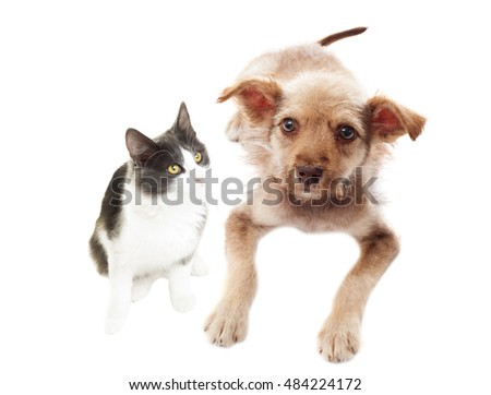 funny black and white cat and puppy together white background isolated