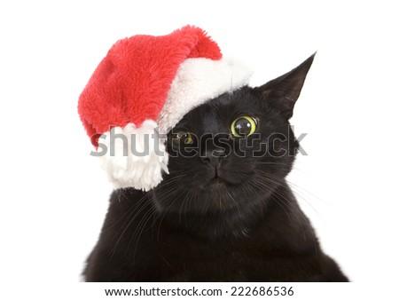 Funny Black Cat Santa - Cute christmas cat, Christmas pet with Santa Claus hat - stock photo