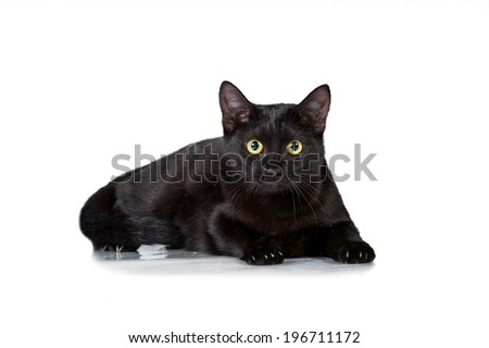 Funny black cat with scared eyes - stock photo