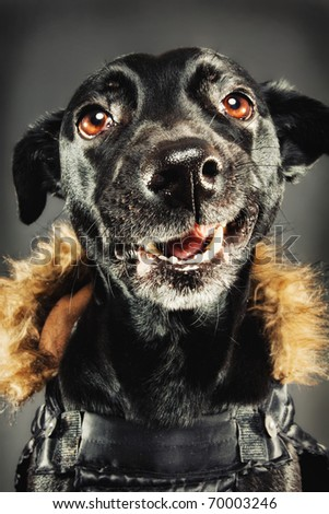 Funny black dog dressed for winter - stock photo