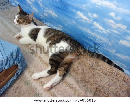 funny bored cat posing on sea stock photo edit now