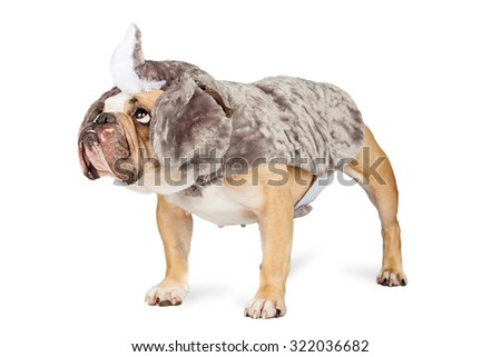 Funny Bulldog breed dog dressed up in a rhinoceros costume standing to the side