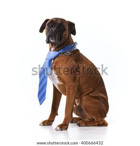 Funny business dog - stock photo