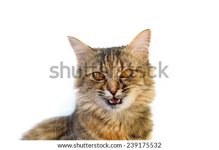 Funny cat - stock photo