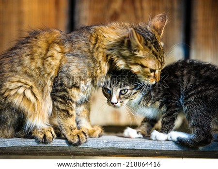 Funny cat and kitten