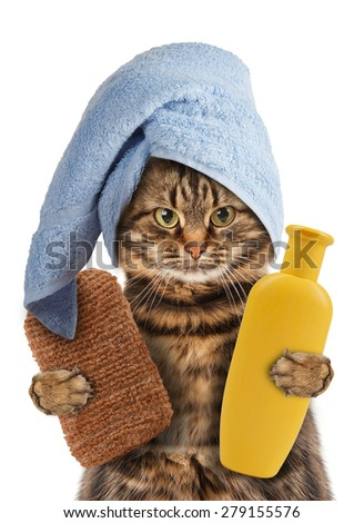 Funny cat. Cat washes - stock photo