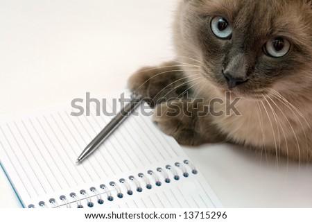 Funny cat diary concept. Cute birman kitten writing message on notebook - stock photo