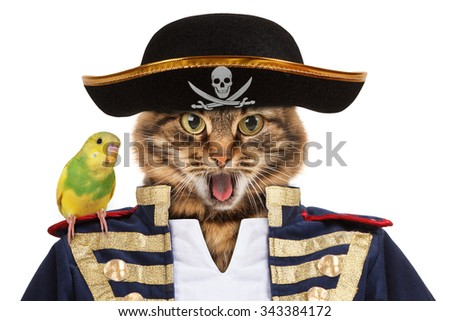 Funny cat dressing in caribbean pirate costume. A parrot sitting on a cat. - stock photo