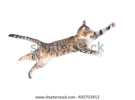 Funny cat flying in the air isolated on white - stock photo
