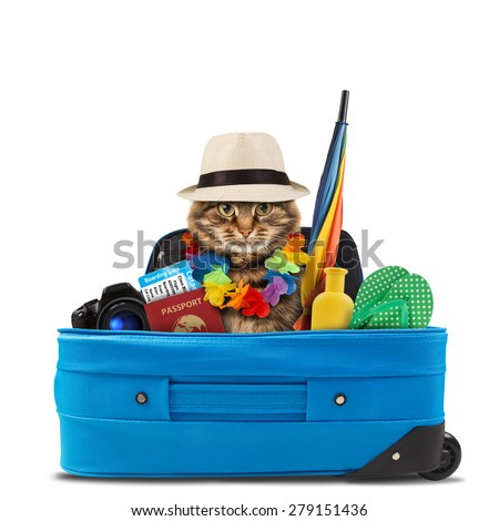 funny cat going on vacation - stock photo