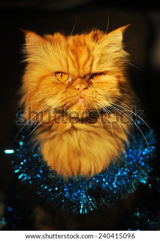 funny cat in Christmas garland - stock photo
